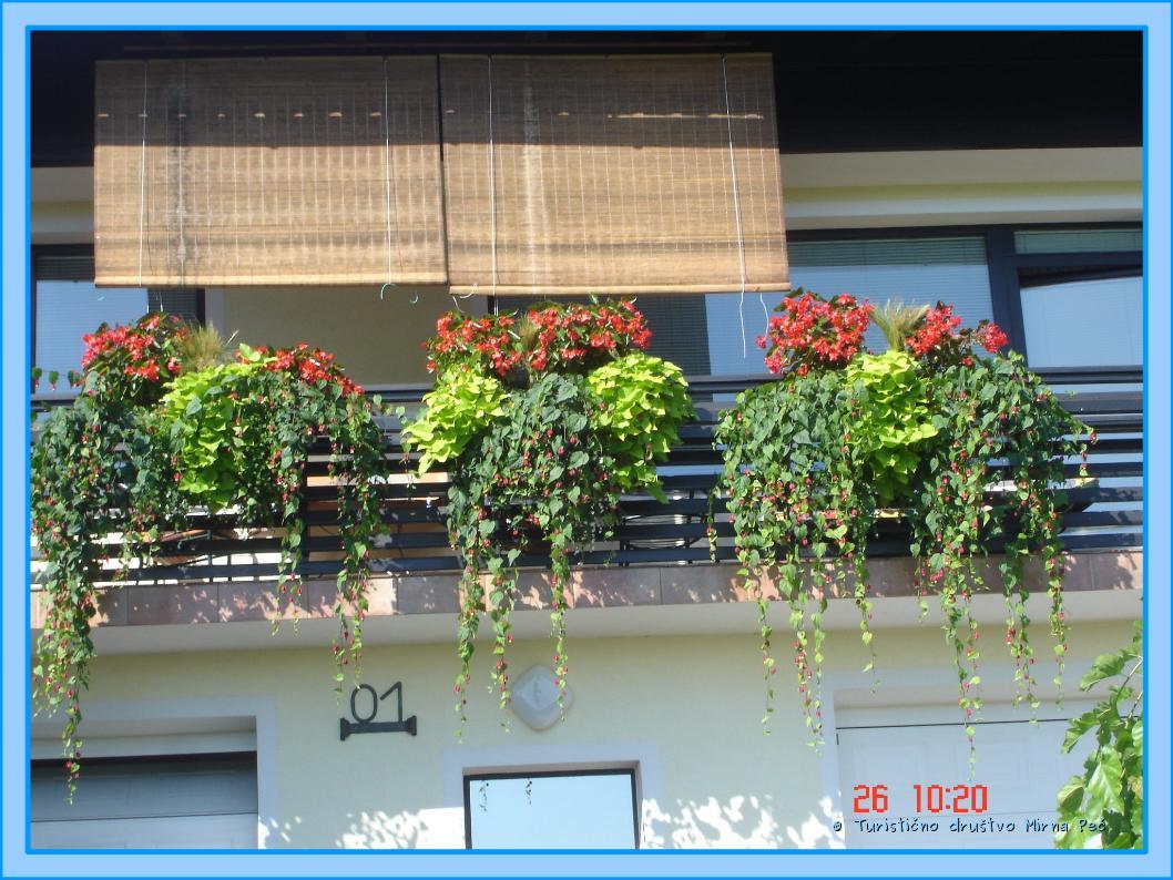 Cvetoče rastline na balkonu Mikčevih (foto: oc. komisija)