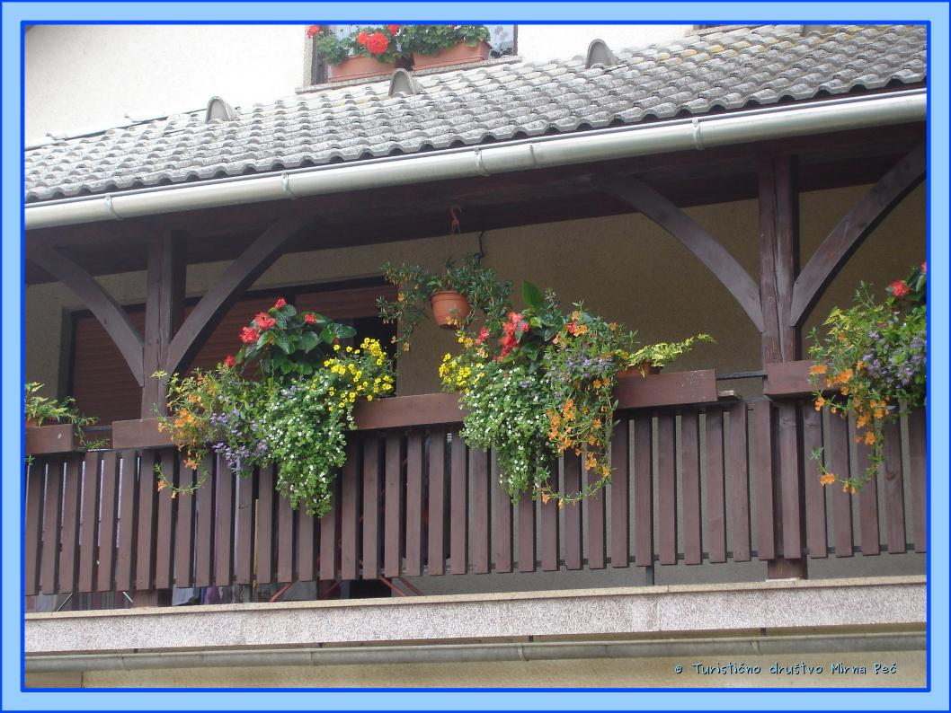 Cvetoče rastline na balkonu Papeževih (foto: oc. komisija)