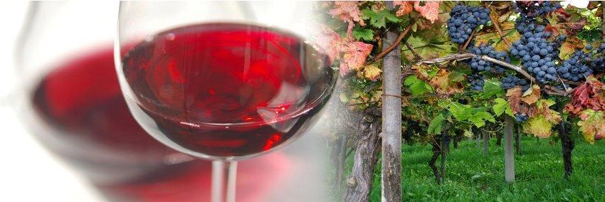 12. festival Mirnopeških vin
